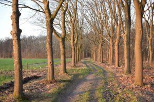 Stiltewandeling (met maaltijd) @ Agnus Dei-Kerk | Waalre | Noord-Brabant | Nederland